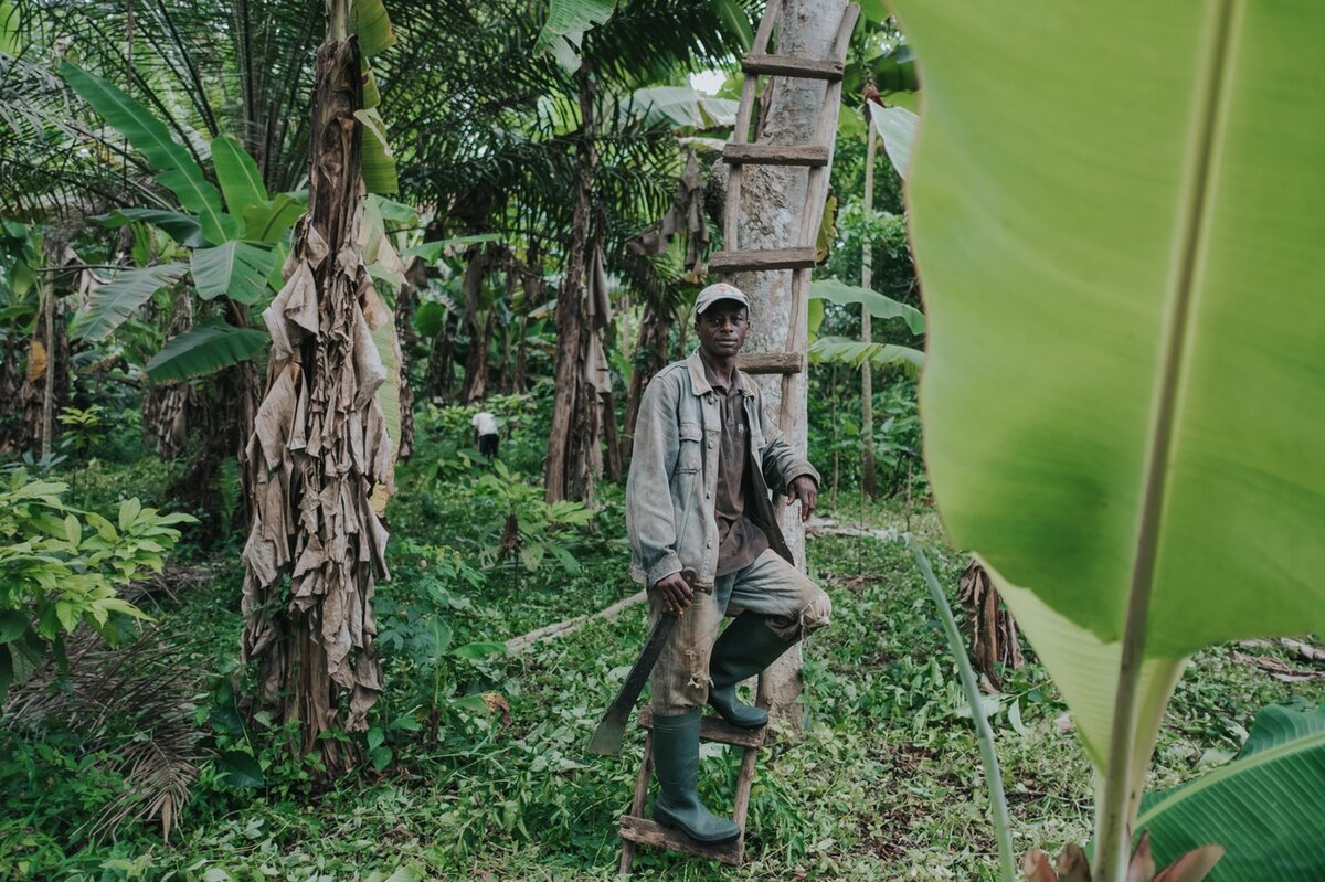 Worker by the cocoa plants in the forest