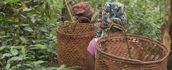 Women travelling through the forest in Africa